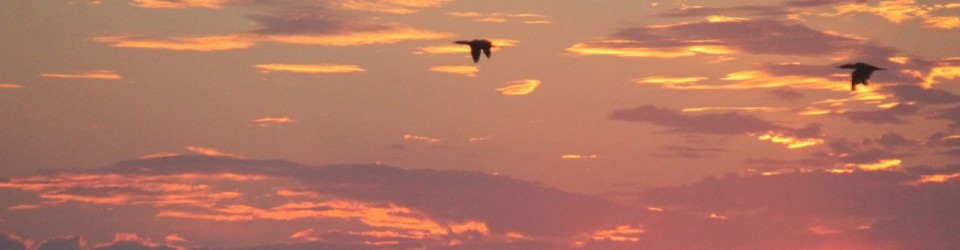 birds in sunrise_0036