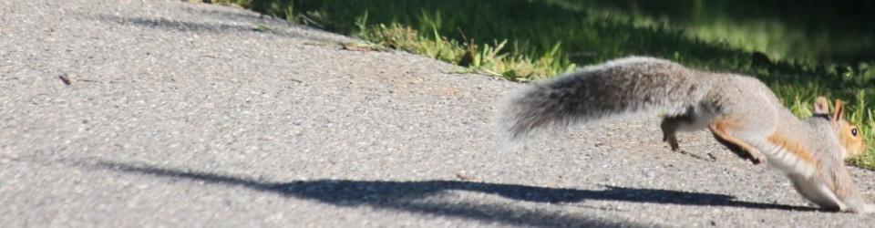 squirrel9729