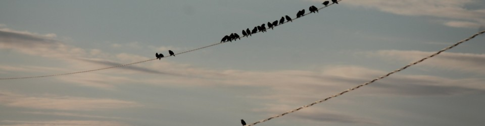 Birds on a Wire_0004