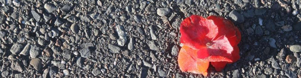 Red flower 20026
