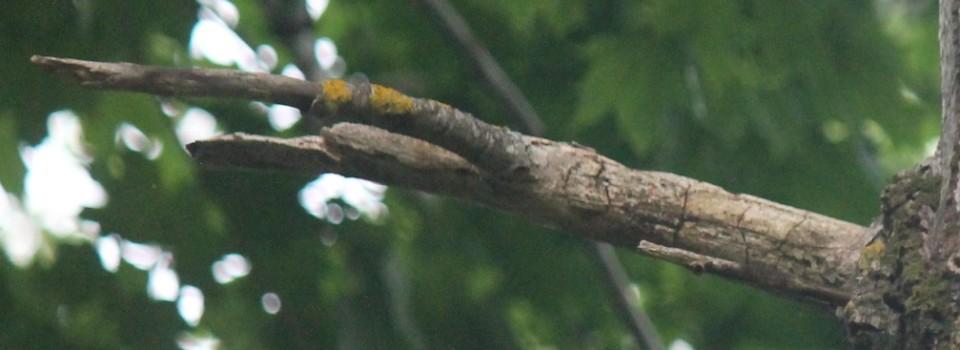 Tree branch 0101