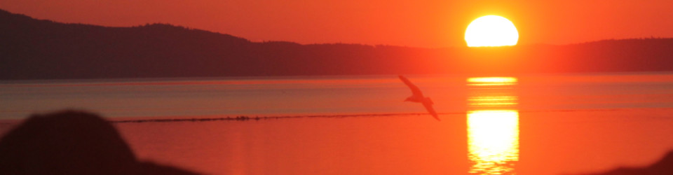 sunrise and gull 3