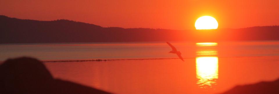sunrise and gull 3
