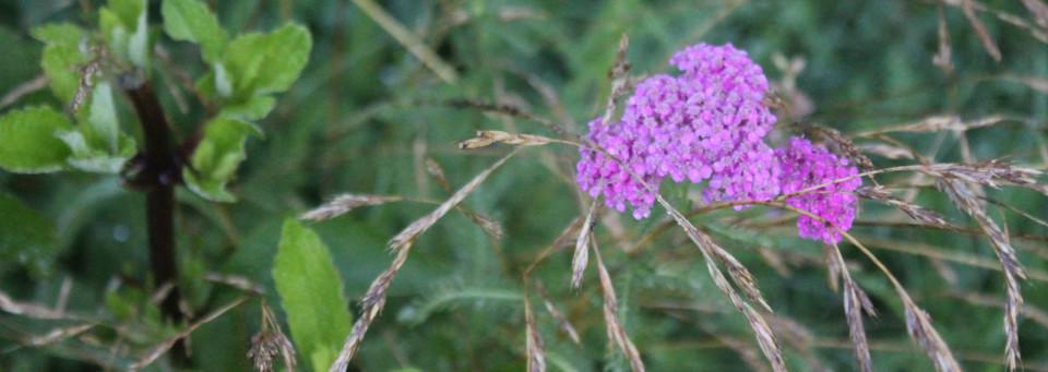 pink flowers & wheat grass
