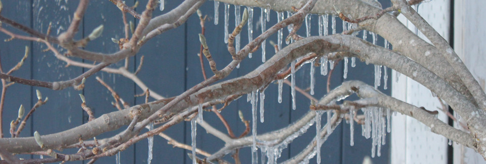 icicles-on-branches