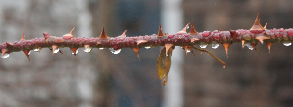rain drops 1