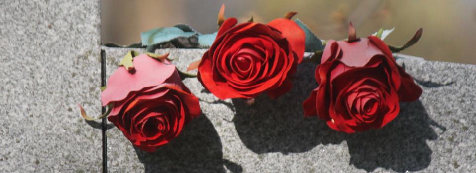 3 rose buds