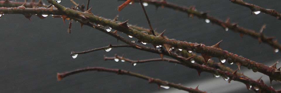 raindrop thornes