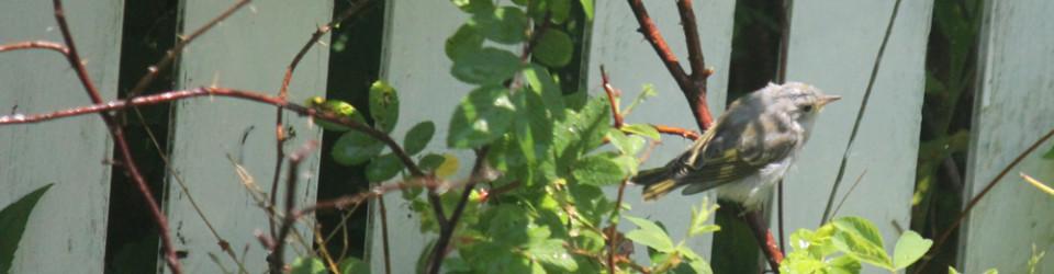 fledging bird
