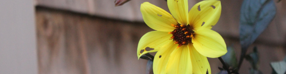 tattered flower